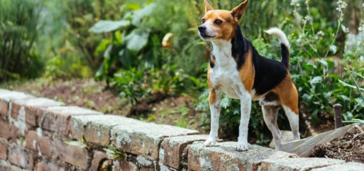 Pets away from Harmful Pests